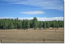 Flagstaff Horse Property